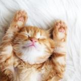 「猫よ…どうしてそこで寝るのだ…」猫飼いあるある10選